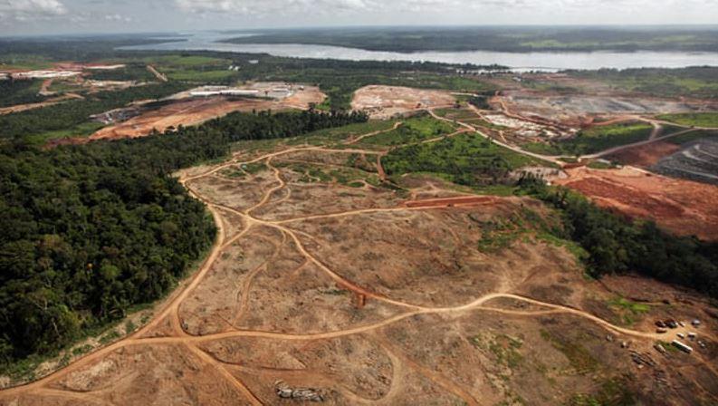 Padurea amazoniana dispare vazand cu ochii