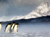 Icebergul A68a ameninta fauna insulei Georgia de Sud