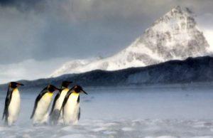 Pinguini rege amenintati de icebergul A68a